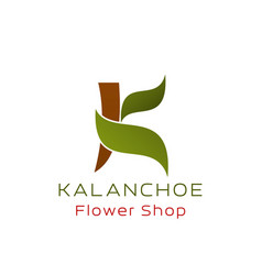 flower shop k letter icon kalanchoe plant vector image