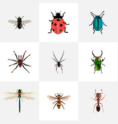 Set of bug realistic symbols with fly ladybug vector