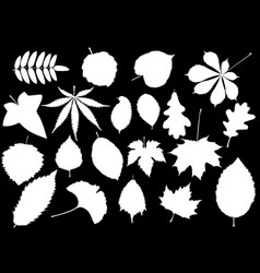 Tree leaves set vector