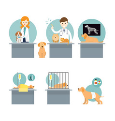 Veterinarian checkup and take care sick pets vector