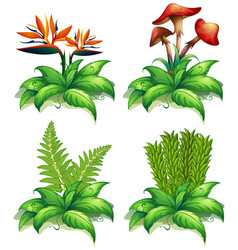 four different types of plants on white background vector image