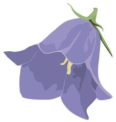 Bud blue ampanula vector