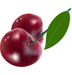 cherry berries with leaf vector image