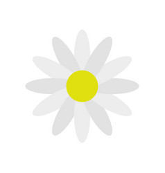 Daisy flower icon vector