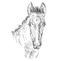 Horse portrait 29 vector