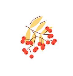 Rowanberry in fall season flat abstract element vector
