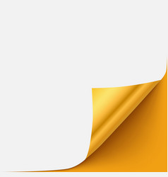 Gold paper curled corner template vector image