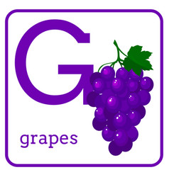 an alphabet with cute fruits letter g grapes vector image