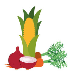 beautiful fresh vegetables isolated icon vector image