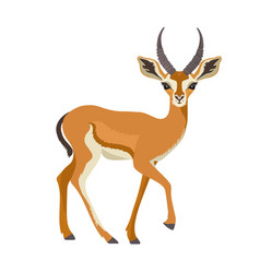 gazelle or antelope with horn african mammal vector image