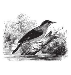 Reed warbler vintage vector