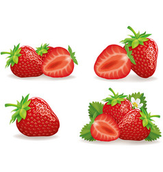 set of different fresh strawberry groups vector image