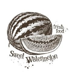 watermelon logo design template fruit or vector image