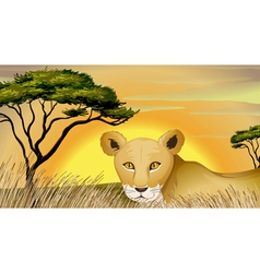 a tiger in nature vector image