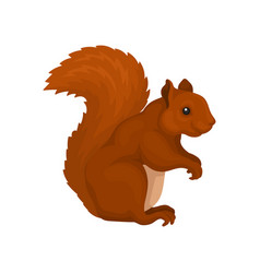 Red squirrel wild forest rodent animal vector