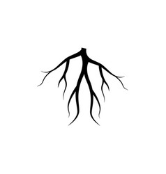 root graphic design template isolated vector image