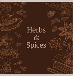 Sketch herbs and spices template vector