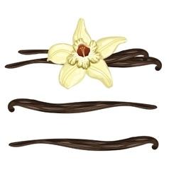 Vanilla sticks with a flower on white background vector