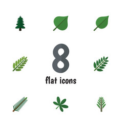 Flat icon bio set of hickory acacia leaf maple vector