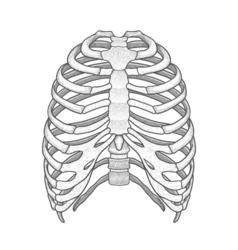 Human rib cage Line art style Boho vector
