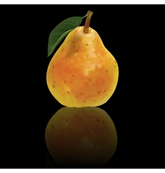 Pear isolated on a black background vector