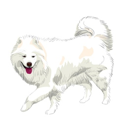 Samoyed dog vector