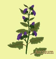 Arctium vector