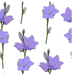 hand drawn campanula flower seamless pattern vector image