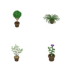 Isometric houseplant set of fern plant flower vector