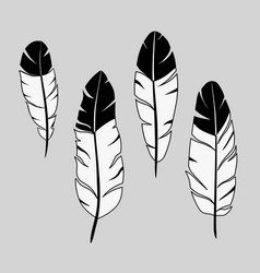 feathers ink hand drawn stock vector image