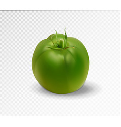 green realistic isolated tomato 3d tomato vector image vector image