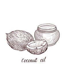 Drawing coconut oil vector