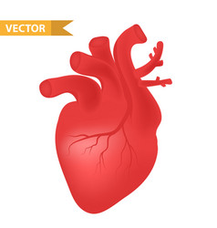 human heart icon realistic 3d style internal vector image