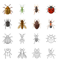 Insect and fly logo set of vector