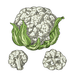 Useful vegetables cauliflower on a white vector