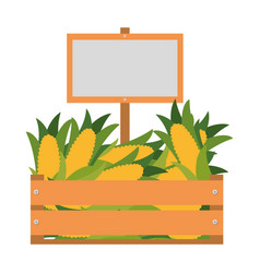 wooden box with sweet corn isolated icon vector image