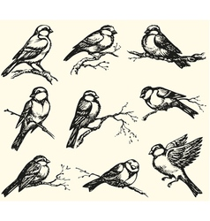 Tits sparrows and bullfinches on branches vector image vector image