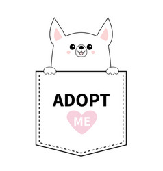 adopt me chihuahua dog in pocket holding paws vector image