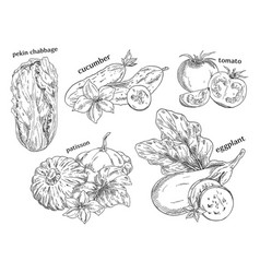 food vegetables isolated sketches vector image