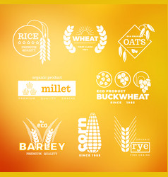 Organic wheat grain farming agriculture vector