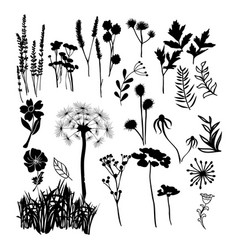 Collection silhouette of wild flowers herbs and vector