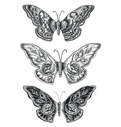 decorative sketch butterflies vector image