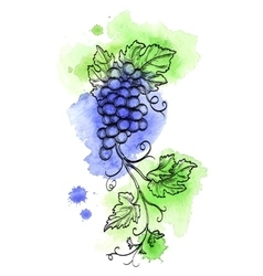 Grape branch on watercolor background vector