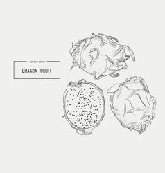hand drawn set of exotic fruits isolated pitaya vector image
