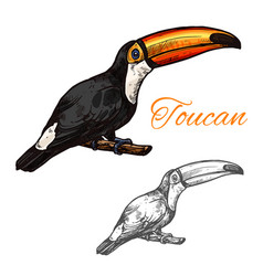 toucan sketch exotic bird icon vector image