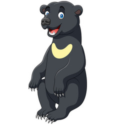 cartoon sun bear vector image