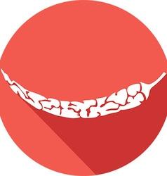 Chili icon vector