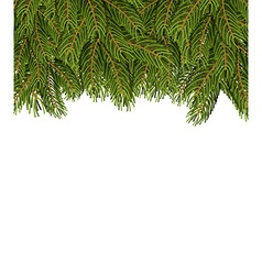 FIR branches on white sheet Christmas background vector image