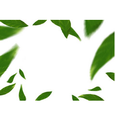 Green fresh spring flying tree leaves over white vector