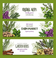 Organic herb and spices farm market banner set vector